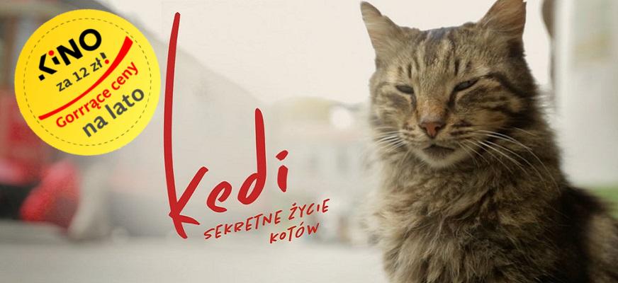 Kedi – sekretne życie kotów